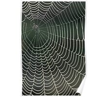 Spiders web, drops of dew Poster