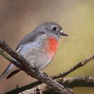 Scarlet Robin (female) by Kerryn Ryan, Mosaic Avenues
