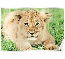 Kittenish Cub Poster