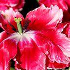 Spring Has Sprung - Inside Out by Sally Haldane