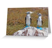 Two Blue-footed Boobies on a rock Greeting Card