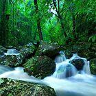 Kondalilla National Park by Adam Gormley