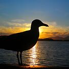 Sunset Seagull  by ©The Creative  Minds