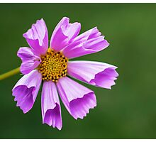 Hues of a Cosmos Photographic Print