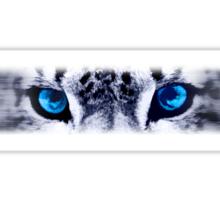 Snow Leopard Eyes Sticker