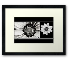 Black and White Gazania Diptych Framed Print