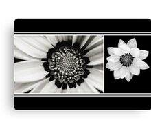 Black and White Gazania Diptych Canvas Print