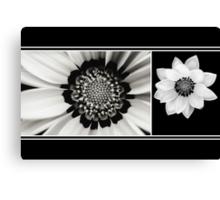 Black and White Gazania Diptych Canvas Print