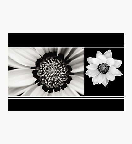 Black and White Gazania Diptych Photographic Print