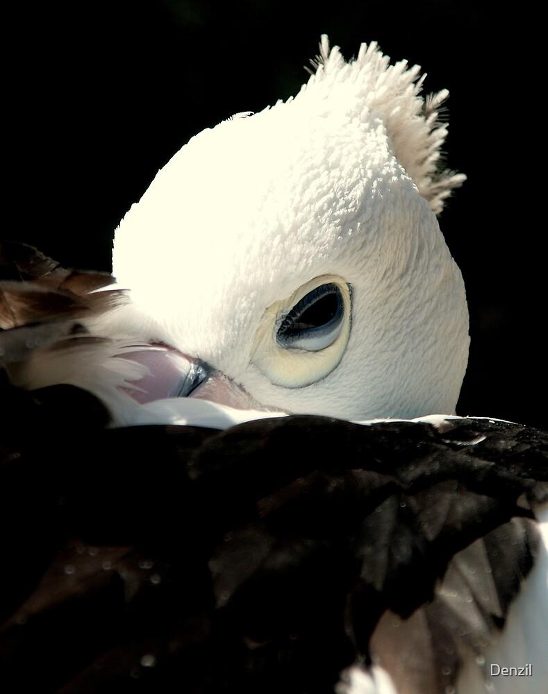 A pelican's eye by Denzil