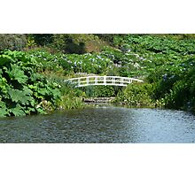white bridge Photographic Print