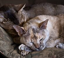 Afternoon nap by Jan Pudney