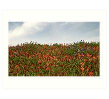 Hilltop Wildflowers Art Print