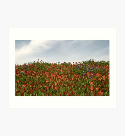 Hilltop Wildflowers Art Print