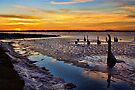 A Winter Mix At Sunset by Carolyn  Fletcher