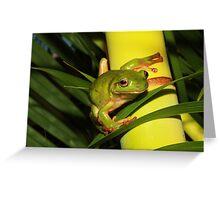 Gree Tree Frog. Greeting Card