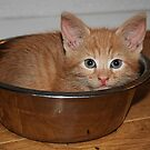 Kitten in a Bowl by Jo Nijenhuis