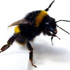 Bee 4 by Shelly Still