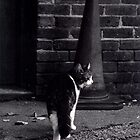 Cat and Cone by Shelly Still