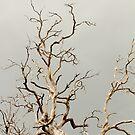 Dead Tree 1 by TeAnne