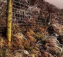 The Fence by Karl Williams