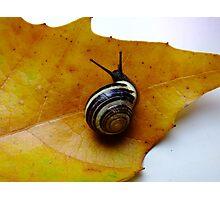 Autumn is here... Photographic Print