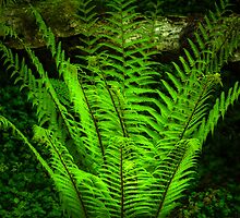 Fern by SSDema