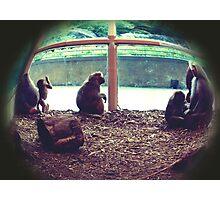 Monkey See, Monkey Do Photographic Print