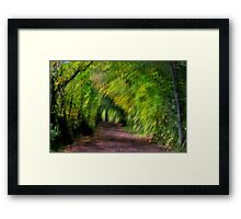 The Path In Framed Print