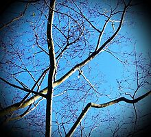 Lonely Bird On A Tree - A song for regeneration (please see description) by Kanages Ramesh