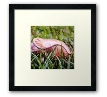 Abstract fungus in grass Framed Print
