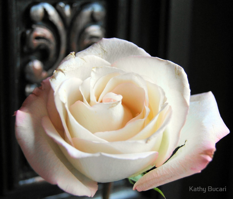 If Love Was A Rose by Kathy Bucari