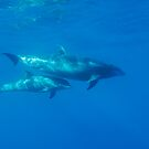 Wild Bottle-nosed dolphin (Tursiops truncatus) mother and calf, underwater view by Sami Sarkis