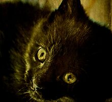 Maui the Cat by MJD Photography  Portraits and Abandoned Ruins