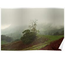 Misty Tree in The Mountains Poster