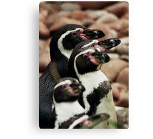 Penguins Canvas Print