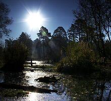 Boldermere Pond, Ockham by Guy Carpenter