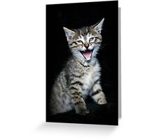 The JOKER Kitty Greeting Card