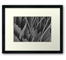 Butterfly scales Framed Print