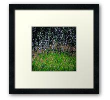 Sparkles and Grass Framed Print