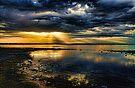 Golden Rays by Carolyn  Fletcher