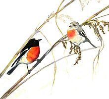 Scarlet Robins by melhillswildart