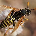 Yellowjacket by Betsy  Seeton