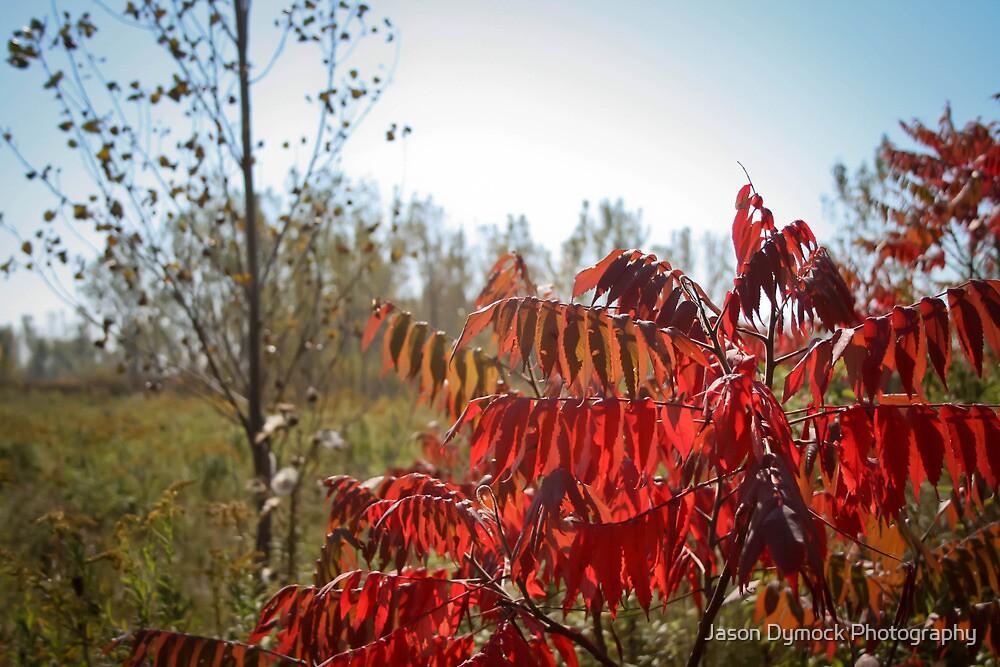 Autumn colours by Jason Dymock Photography