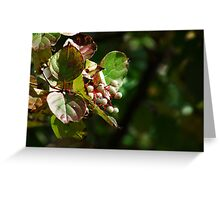 Autumn White Berries Greeting Card