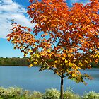 It's official... Autumn is Here by Marcia Rubin
