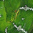 Emerald boa by Mundy Hackett