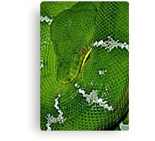 Emerald boa Canvas Print