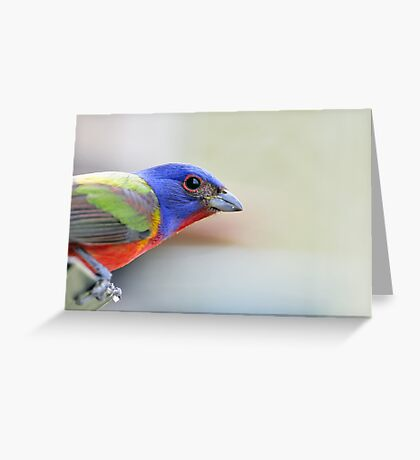 Painted bunting Greeting Card