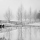 Foggy Morning by Belinda  Churchill